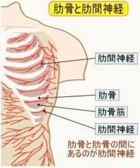 胸背部痛-1